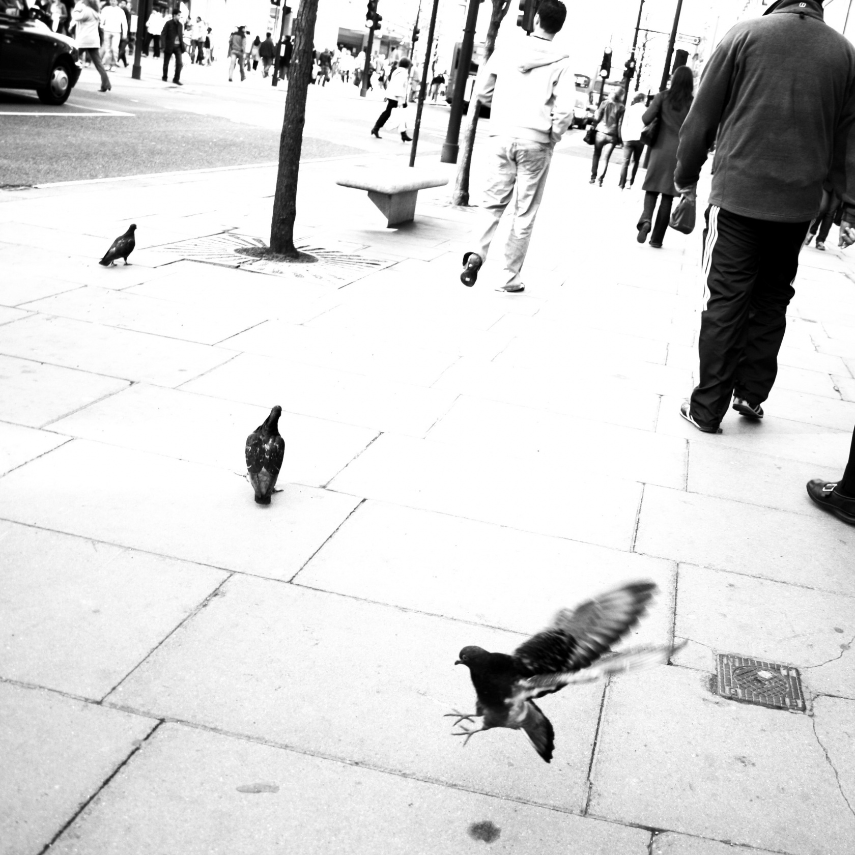 Foto: People of London - pigeon